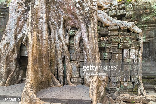 tree temple old : Stock Photo