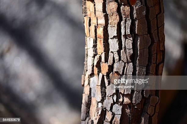 Tree Texture Background Pattern