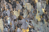 Close up bark of tree texture