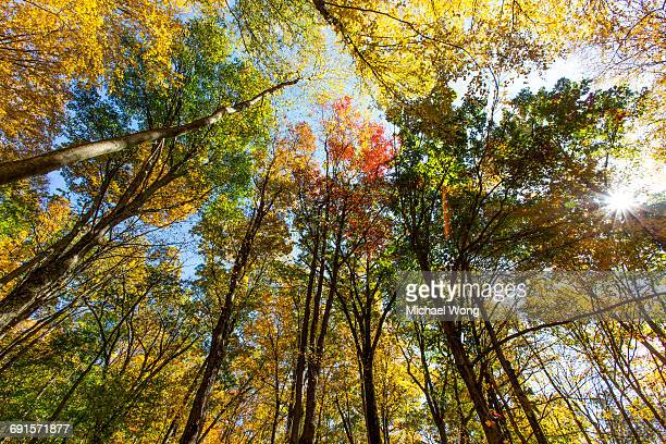 Tree tops showing fall colors