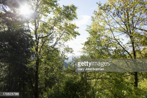 tree tops with sunlight, Spain : Stock Photo