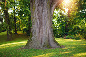 Tree trunk in the park against sunlight
