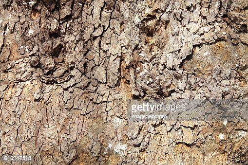 Tronco de árvore de fundo : Foto de stock