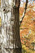 Tree trunk, close-up