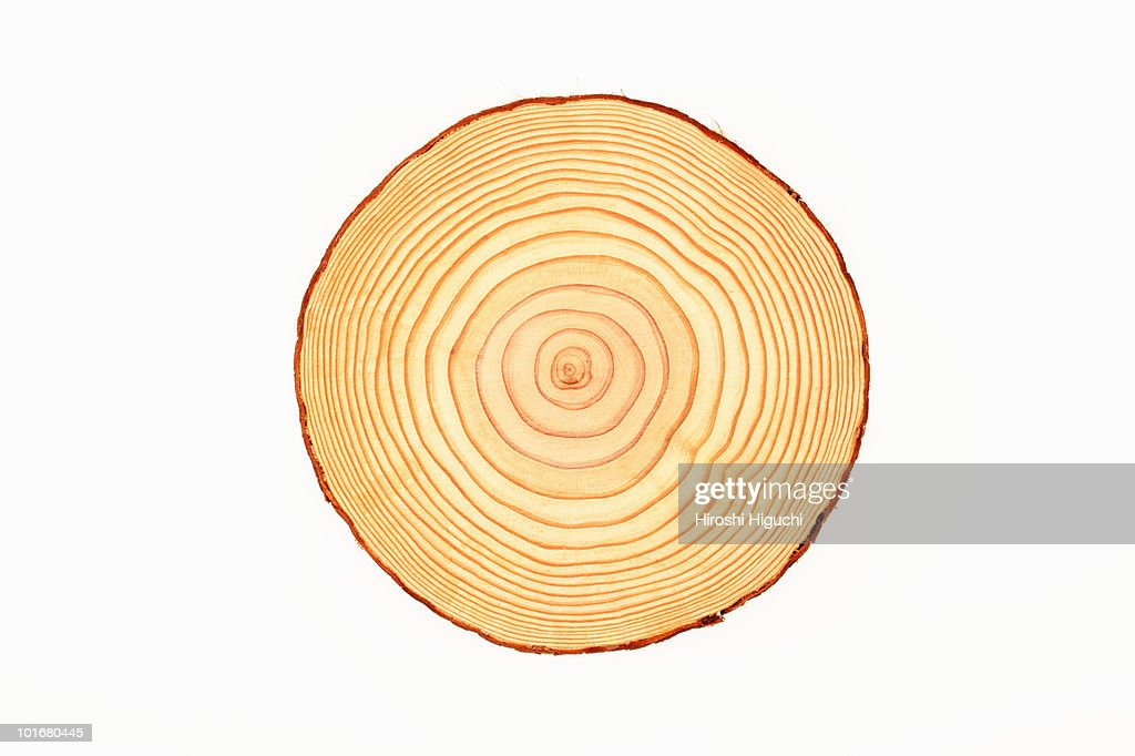 Tree trunk, cross-section, annual rings : Stock Photo