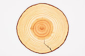 Tree trunk, cross-section, annual rings