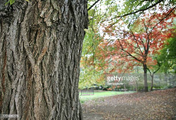 Tronco de árvore no outono