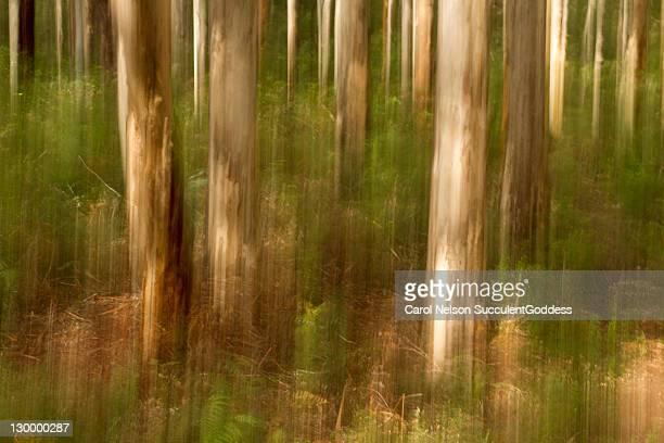 Tree trunk in woods