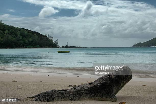 Tree trunk on beach, Port Launy, Seychelles