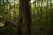 Tree trunk on the background of green forest. Dark woods.
