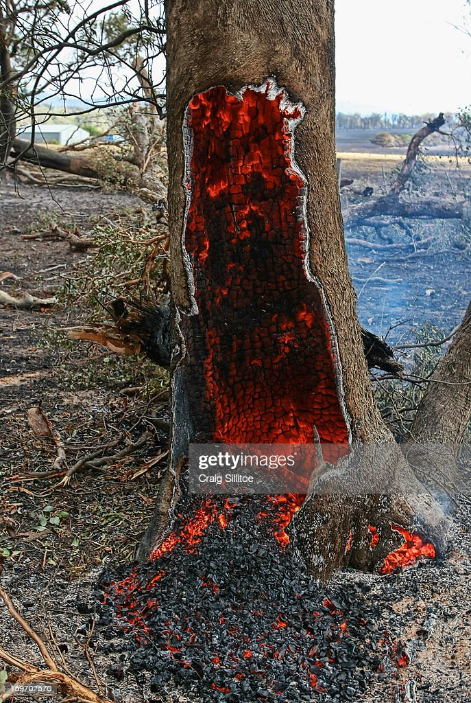 A tree trunk smolders after a fire on January 19, 2013 in Melbourne, Australia. Bushfires in Victoria have claimed one life and destroyed several houses. Record heat continues to create extreme fire conditions throughout Australia.