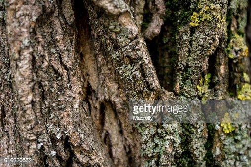 Tree trunk texture : Stockfoto