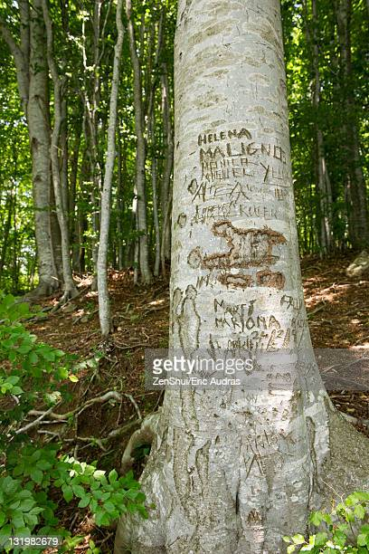 Tree trunk with carvings