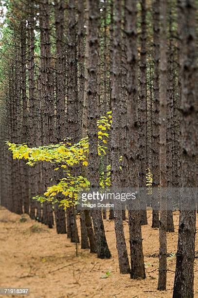 Tree trunks and leaves