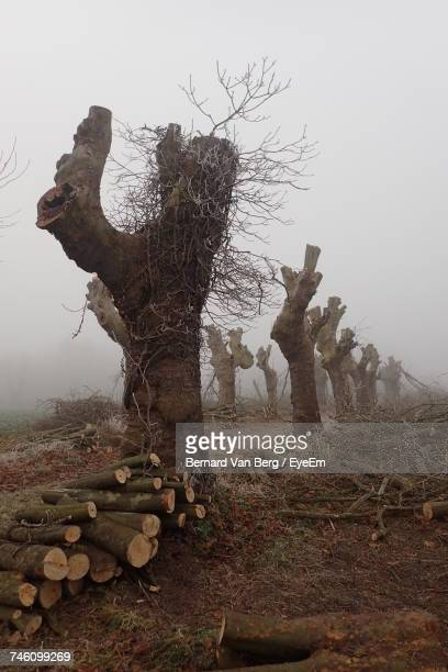 Tree Trunks On Field During Foggy Weather