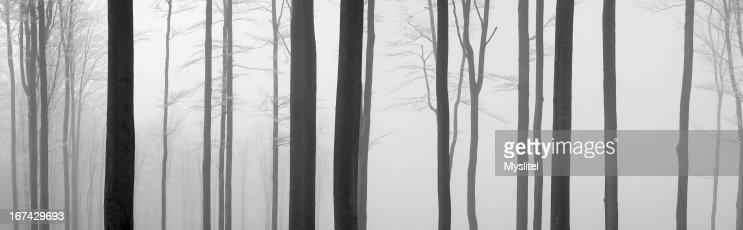 Árbol trunks : Foto de stock