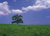 A tree under the blue sky