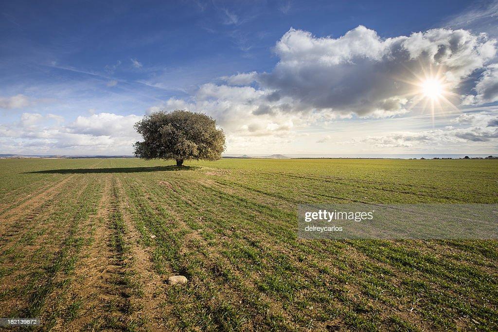 Tree under the sun : Stock Photo