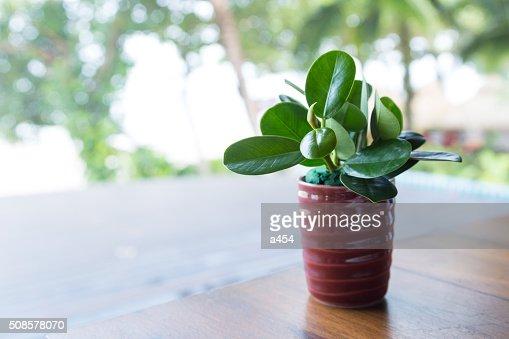 Tree vases, tableware : Stockfoto