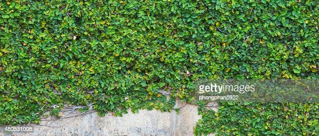 Tree wall : Bildbanksbilder