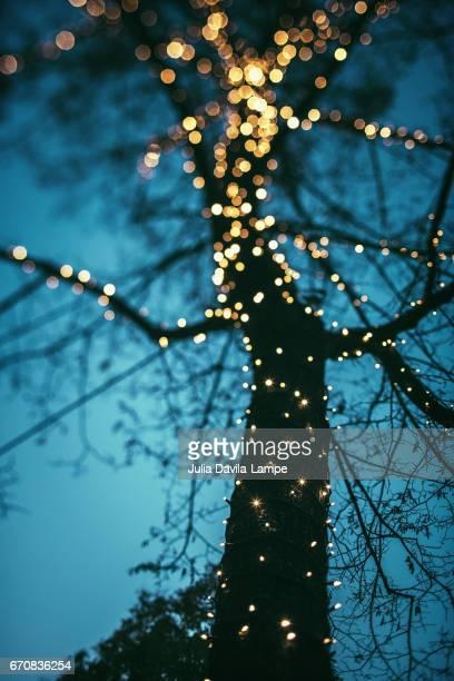 Tree with christmas lights.