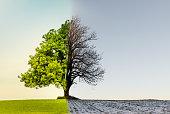 Beuatiful tree with climate, weather or season change