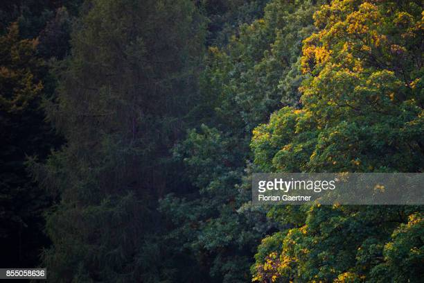 A tree with colorful leaves in the park 'Tiergarten' is pictured on September 27 2017 in Berlin Germany