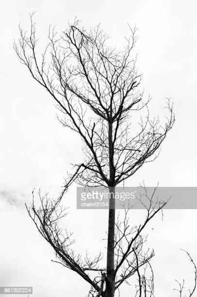 Tree with dry branches