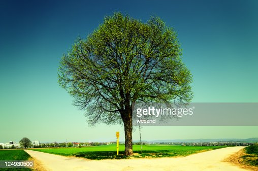 Tree with green and yellow field : Stock Photo