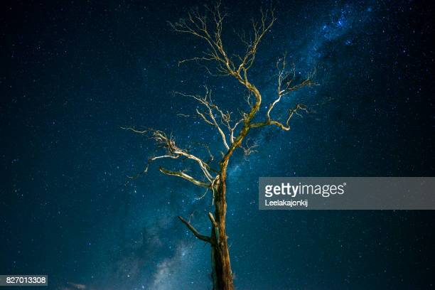 Tree with Milky way