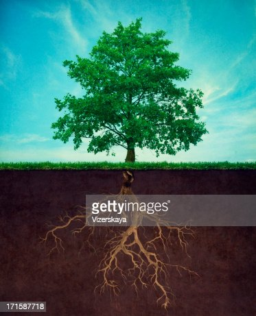 tree with root : Stock Photo