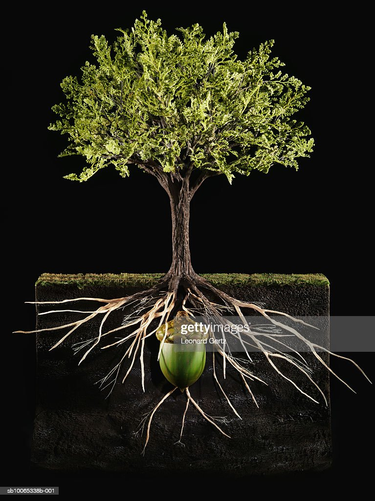 Tree with roots and acorn below (digital composite) : Stock Photo