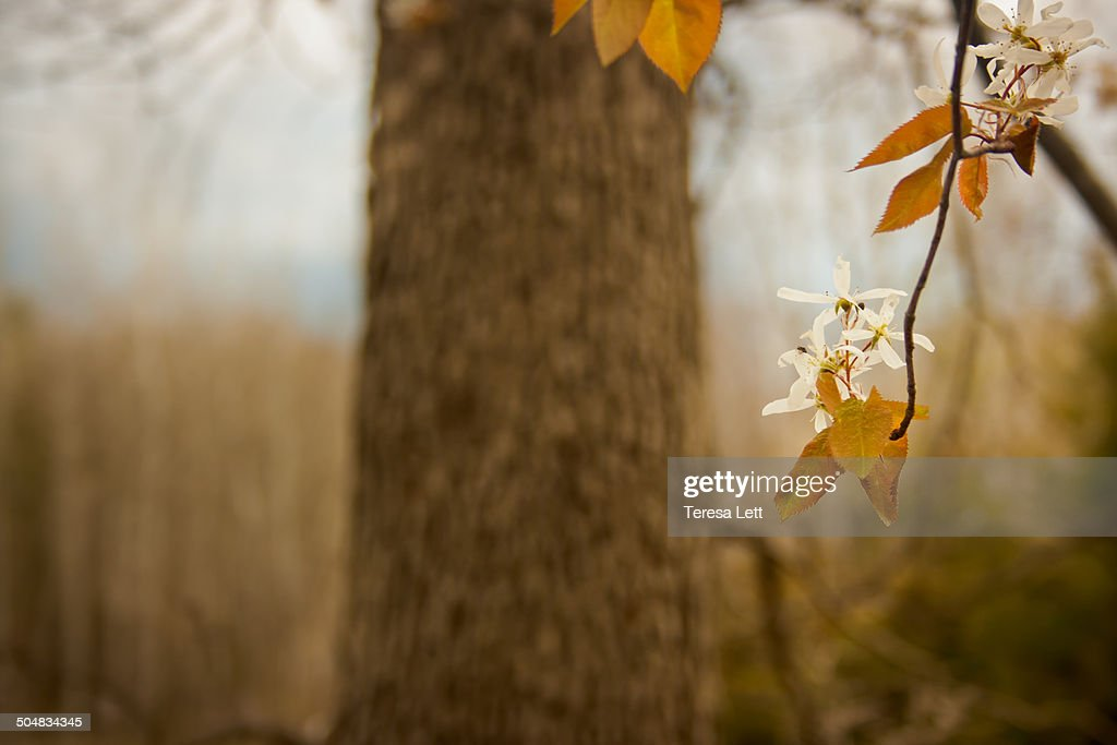 Tree with spring blossoms