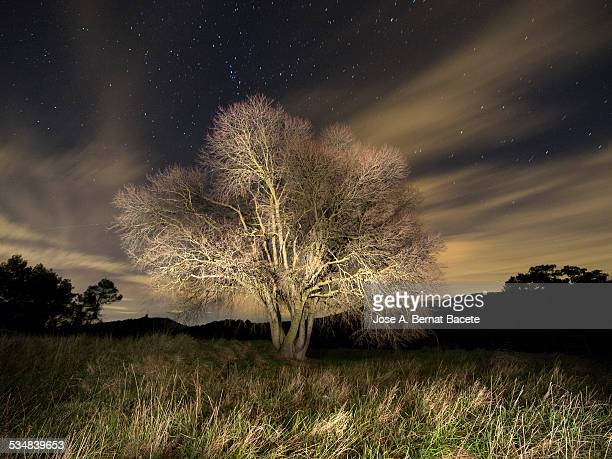 Tree without leaves one winter night