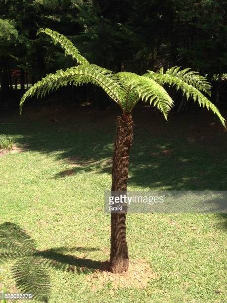 Tree xaxim, typical of the Brazilian fauna.