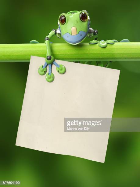treefrog on a branch
