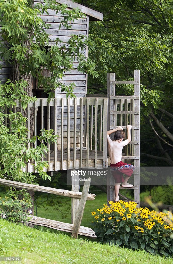 Treehouse : Stock Photo