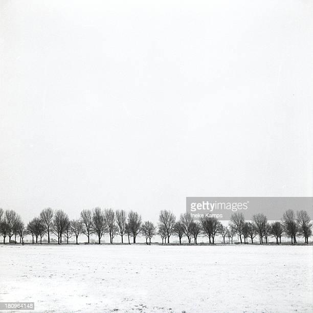 Treeline in winter