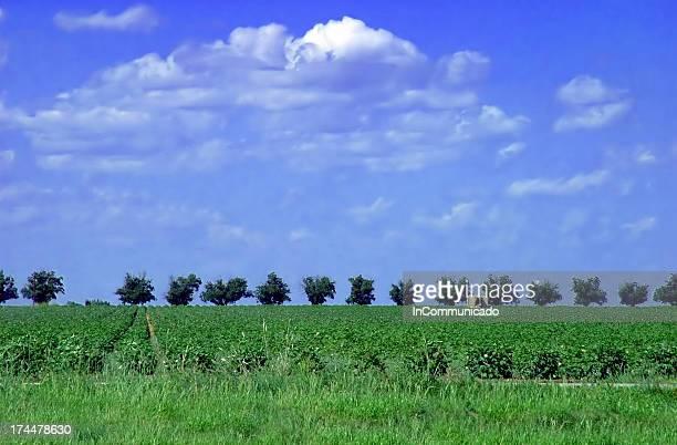 Treeline sob céu azul