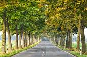 Treelined country road in autumn