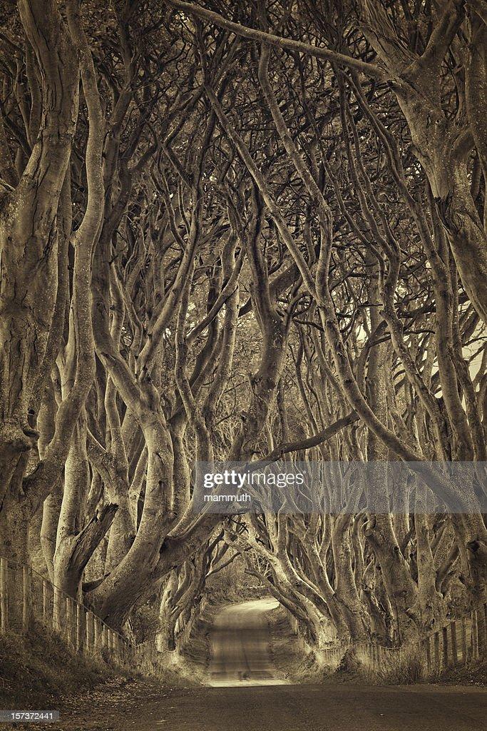 treelined country road : Stock Photo