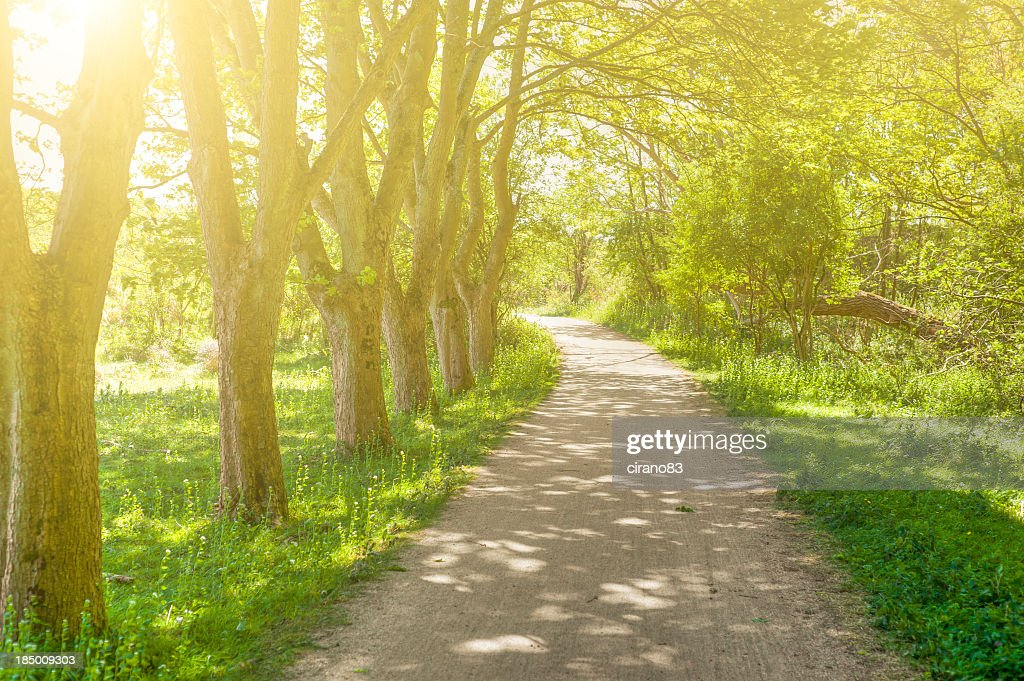Treelined Footpath In The Spring Dutch Forest At Sunset