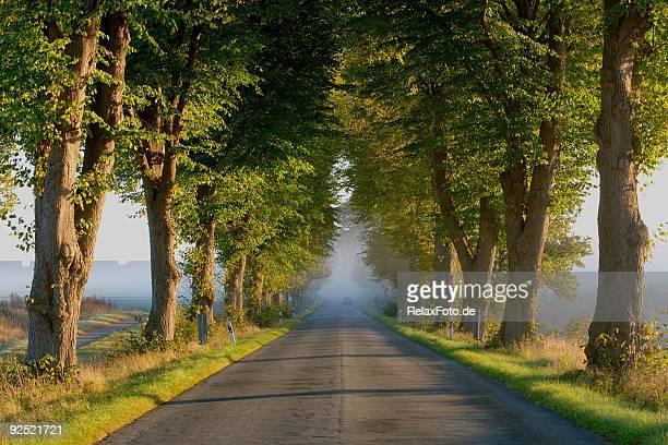 Von Bäumen gesäumt Straße bei Sonnenaufgang im Nebel (XXL