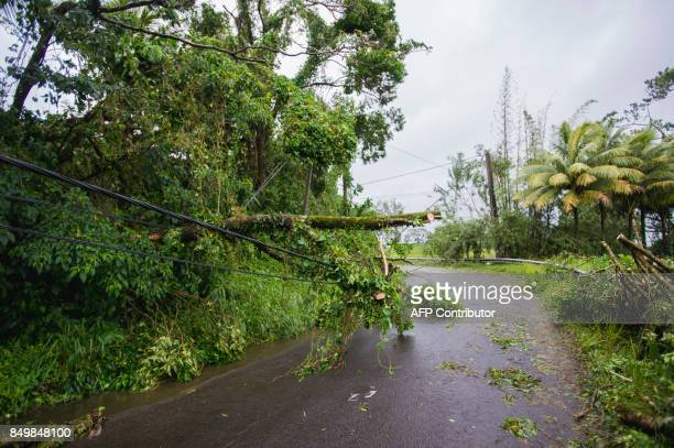 Trees ae seen across a road in SaintPierre on the French Caribbean island of Martinique after it was hit by Hurricane Maria on September 19 2017...