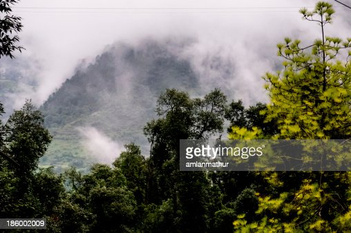 Trees against foggy hills : Stock Photo