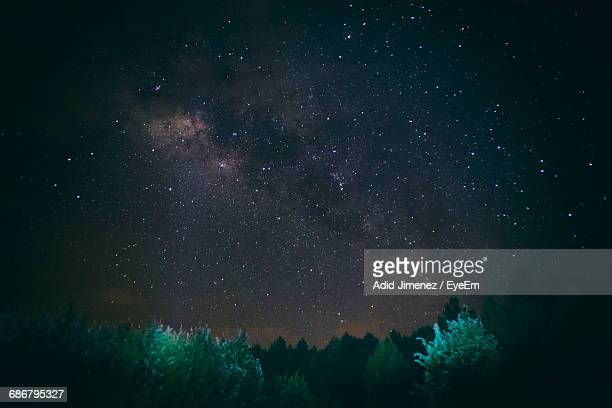 Trees Against Starry Sky At Night