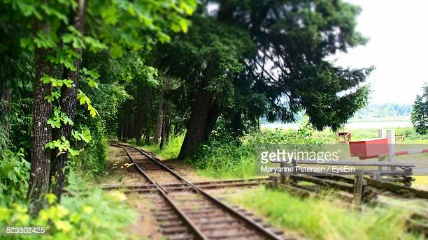 Trees Along A Railroad Track