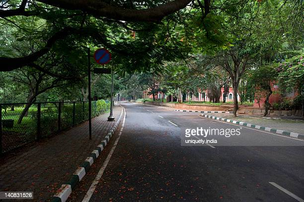 Trees along a road, Bangalore, Karnataka, India
