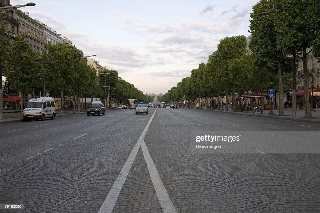 Trees along a road, Paris, France : Foto de stock