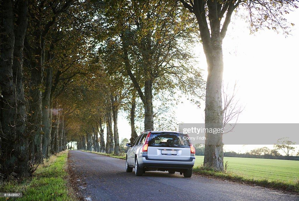 Trees along the road Skane Sweden.